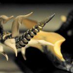 akalameetv205_maga-margareth_drebes-md_dragons